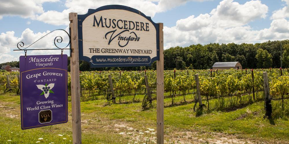 Muscedere Vineyards Sign